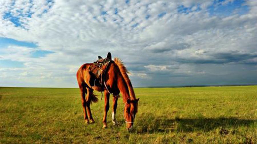 深度摄影:呼伦贝尔大草原阿尔山满洲里国门双飞双卧七日纯玩游
