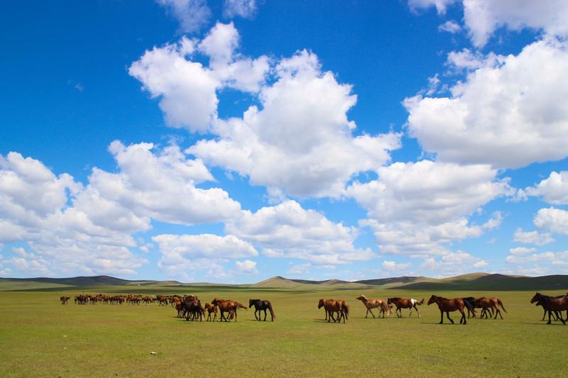 跟团游:呼伦贝尔大草原穿越阿尔山白狼镇巴尔虎蒙古部落满洲里黑山头额尔古纳恩和双飞九日纯玩游