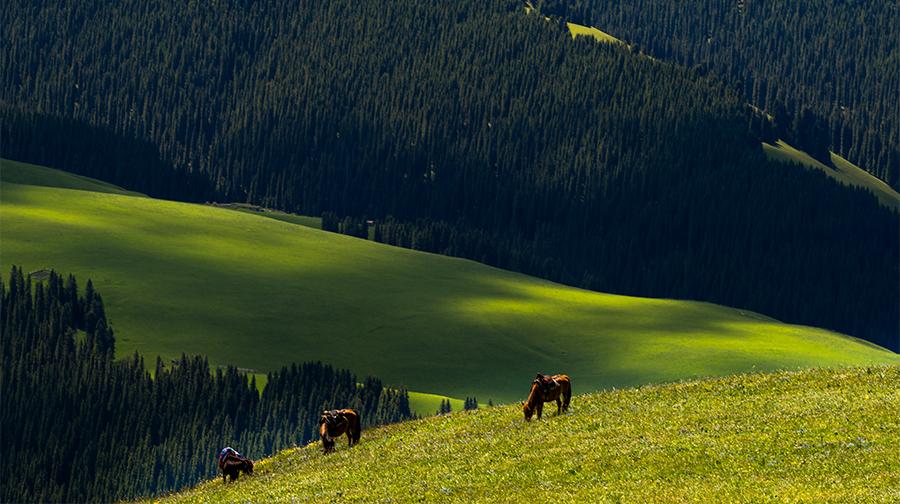 最美的六大草---伊犁草原
